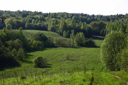 Field with forest and hills on the horizon.