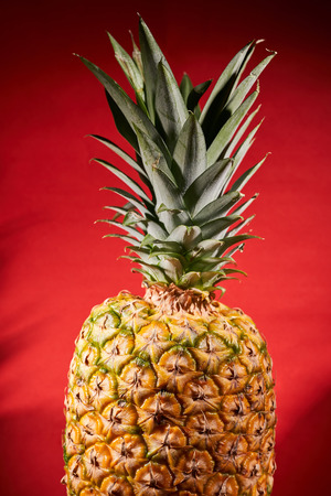 Ripe pineapple on red background. Close-up shooting. Stock Photo