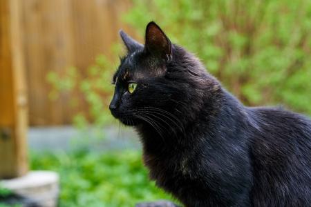 Black cat shot close-up in the wild.