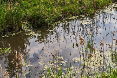 A river with a Bank overgrown with grass. The reflection in the water