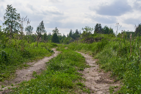 Old country dirt road in the middle of the forest Zdjęcie Seryjne - 125340043