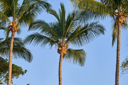 Tropical palm trees against the blue sky