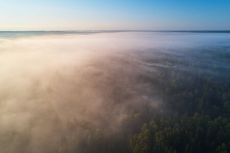 Aerial photography from the drone. The morning forest is covered with dense fog. 免版税图像