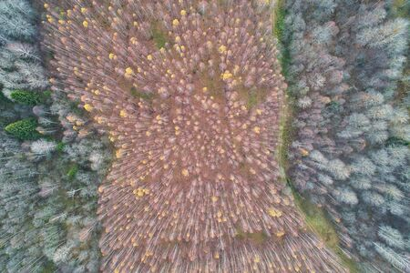 Aerial view with a drone. Autumn multicolored mixed forest top view.