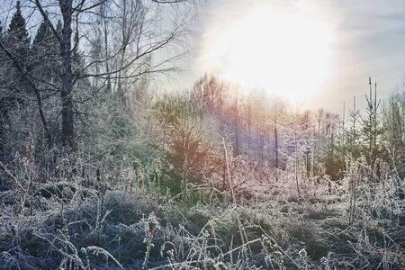Beautiful winter landscape with trees covered with ice crystals.