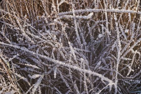 Grass covered with ice crystals in the morning sun.