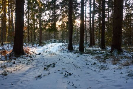 Winter sunset view of the forest road. Road in the winter forest. The sun shines through the branches of trees.