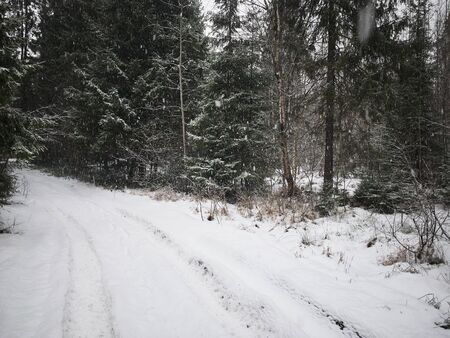 Beautiful winter landscape with road, forest and falling snow. Banco de Imagens