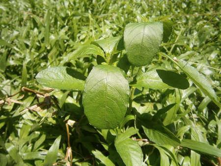 unwanted flora: weed