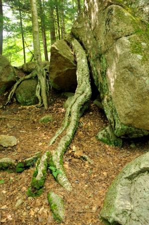 Overleven bomen Stockfoto