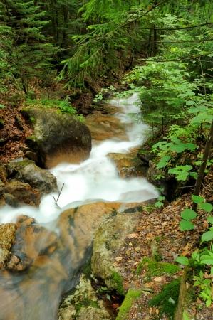 notch: Flume Gorge in Franconia Notch State Park
