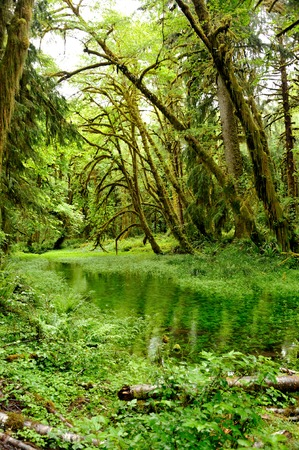 washington state: Hoh Rainforest in Olympic National Park in Washington state.