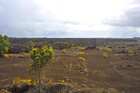 big island: Volcanic Park Big Island Hawaii