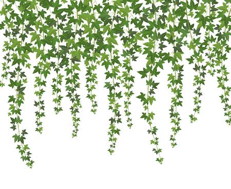 Hiedra verde. Planta trepadora de pared enredadera colgando desde arriba. Fondo de vector de vides de hiedra de decoración de jardín