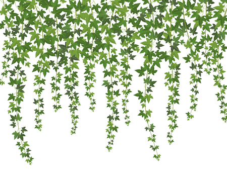 Green ivy. Creeper wall climbing plant hanging from above. Garden decoration ivy vines vector background