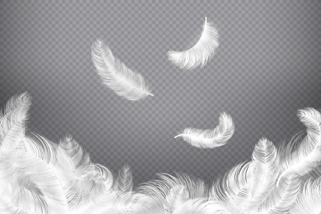White feather background. Closeup bird or angel feathers. Falling weightless plumes. Dream vector illustration