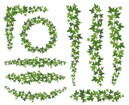Grüner Efeu. Blätter an hängenden Schlingpflanzenzweigen. Kletterwand Efeu Dekoration Wand Pflanzen Vektor Set isoliert