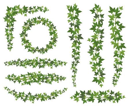 Zielony bluszcz. Liście na wiszących gałęziach pnączy. Ściana wspinaczkowa bluszcz dekoracja ścienna roślina wektor zestaw na białym tle