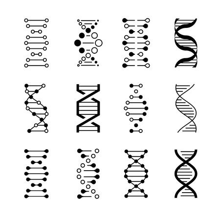Iconos de ADN. Código de estructura genética, modelos de moléculas de ADN aisladas sobre fondo blanco. Símbolos vectoriales de instrucciones genéticas