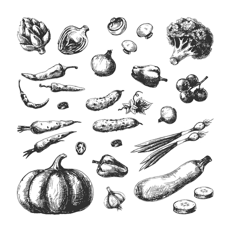 Sketch vegetables. Pumpkin cucumber broccoli carrot onion champignon tomato. Vegetable vegan hand drawn vintage vector isolated set Illustration