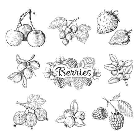 Bacche disegnate a mano. Disegno vintage di ciliegia mirtillo fragola mora, disegno di schizzo di bacche. Set di modelli grafici vettoriali illustrazione dolce natura selvaggia cibo biologico set