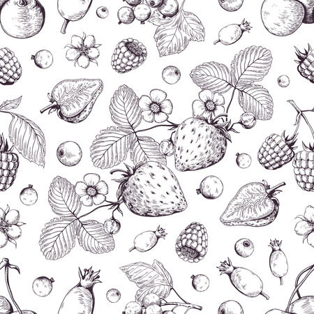 Hand drawn berries pattern. Vintage forest cherry strawberry blackberry cranberry sketch drawing. Vector dessert vintage menu background