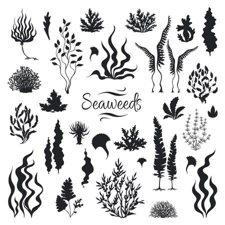 Algen-Silhouetten. Unterwasserkorallenriff, handgezeichnete Seetangpflanze, isolierte Meeresunkräuter im Freien. Vektor-Set Skizze Aquarium Algen