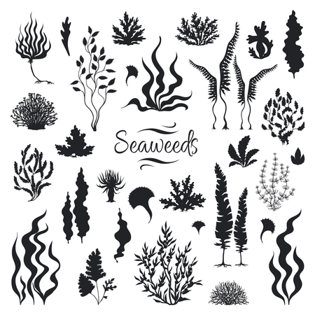 Seaweeds silhouettes. Underwater coral reef, hand drawn sea kelp plant, isolated marine weeds outdoor ocean. Vector set sketch aquarium seaweeds 向量圖像