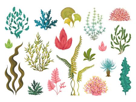 Algues. Plantes océaniques sous-marines, éléments de corail de mer, algues marines dessinées à la main, dessin décoratif de dessin animé. Ensemble d'algues d'aquariums de tirage vectoriel Vecteurs