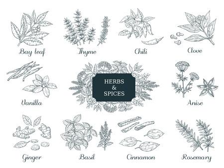 Spezie disegnate a mano. Erbe e verdure alimentari indiane, ingredienti italiani e asiatici, peperoncino timo e zenzero illustrazione vettoriale vintage sketch