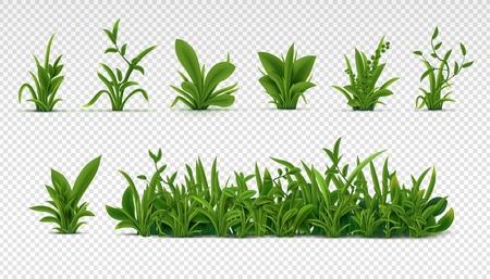 Herbe verte réaliste. Plantes printanières fraîches 3D, différentes herbes et buissons pour affiches et publicité. Vecteur défini des objets isolés sur blanc Vecteurs