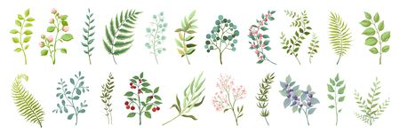 Botanic elements. Trendy wild flowers and branches, plants and leaves green collection. Vector vintage drawing watercolor greenery illustration floral bouquet
