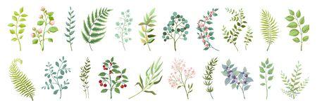 Elementi botanici. Collezione di fiori e rami selvatici alla moda, piante e foglie verdi. Mazzo floreale dell'illustrazione del verde dell'acquerello del disegno dell'annata di vettore