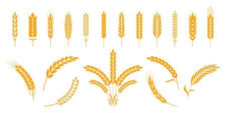 Spighe di grano e segale. Chicchi di riso d'orzo ed elementi per il logo della birra o alimenti agricoli biologici. Illustrazione vettoriale forme araldiche isolate modelli dorati riso e orzo