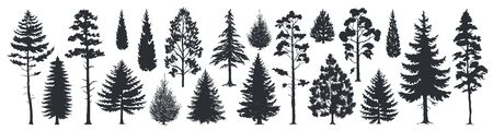 Pine tree silhouettes. Evergreen forest firs and spruces black shapes, wild nature trees templates. Vector illustration woodland trees set on white background Фото со стока - 127398480