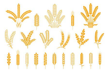 Wheat and rye ears. Oats barley rice spikes and grains, heraldic elements for beer and bread. Vector symbol stalk and seed food isolated collection