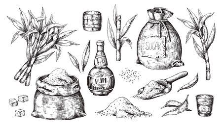 Hand drawn sugarcane and rum. Vintage liquor bottle and glasses, sugar sack and cubes, sugar organic plants. Vector illustration engraved alcoholic beverage image on white background Иллюстрация
