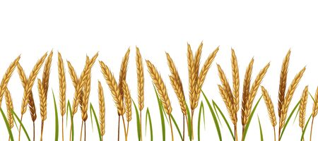 Realistic wheat. Cereals agriculture horizontal border seamless pattern. Vector illustration isolated background with spike wheats and green leaves on white background