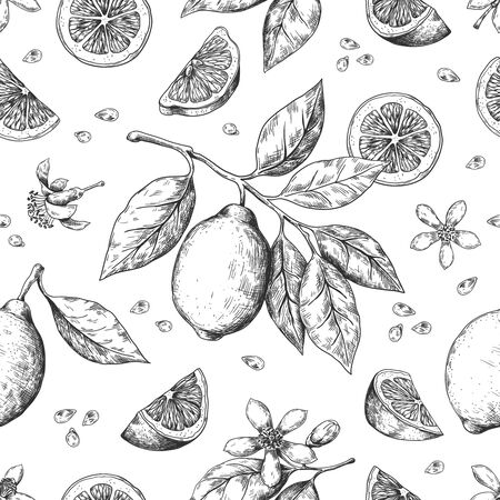 Hand drawn lemon pattern. Vintage seamless texture for juice label, citrus ink sketch. Vector illustrations orange lemon lime fruit summer pattern with leaves and branch for wrapping print Ilustração