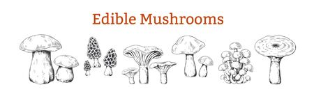 Mushrooms. Hand drawn vintage illustration with organic food mushrooms, vegetarian sketch. Vector collection isolated various raw forest boletus for kitchen or black engraving on white background Ilustrace