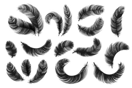Black feathers. Realistic fluffy swan feathers, vintage isolated quill silhouettes, vector angel or bird twirled feathers on white background. Decorative detailing ink hand drawn silhouette birds 向量圖像