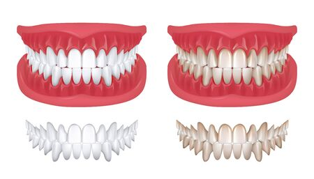Realistic teeth. Isolated white 3D smile for orthodontics clinic, dentistry concept with white jaw render. Vector oral hygiene teeth model for denture or beauty smile illustration