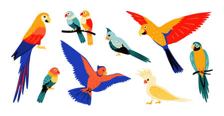Parrots. Colorful cartoon tropical birds, flying and sitting wild jungle parrot, isolate collection of summer doodle design elements. Vector illustration set amazon wildlife