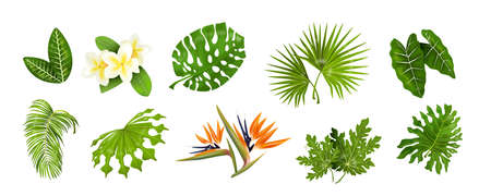 Tropic leaves. Jungle greenery, monstera and banana palm leaf, decorative tropical collection of exotic plants. Vector isolated set image for design spa and beauty poster on white background