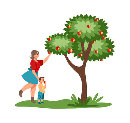 Harvesting. Mother and child pick red apples in garden. Cartoon female with kid walking in park. Cute woman gathering juicy fruits from tree, autumn rustic orchard. Vector people illustration