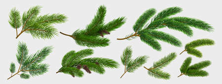 Fir branches. Realistic pine tree Christmas decorative elements isolated on white background collection, green spruce tree branch with brown cone. New year botanical vector winter holiday design set