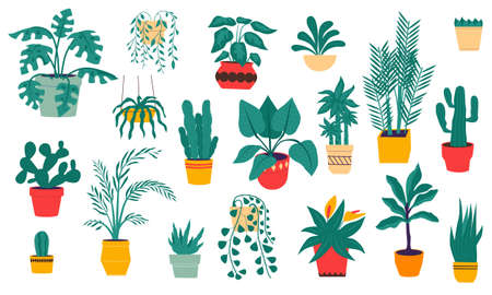 House plants. Cartoon tropical and desert flowers in ceramic pots. Isolated evergreen indoor ficuses, palms and cactus. Flat hand drawn succulent and monstera. Vector home interior decoration set