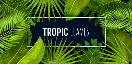 Tropic background. Realistic green jungle foliage, frame with text. Monstera, banana and palm leaves on black. Beauty and cosmetics advertising, textile decoration template. Vector rainforest mockup