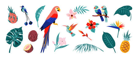Tropical poster. Jungle flora and fauna. Exotic flowers and fruits, palm or monstera leaves, colorful parrots and hummingbirds. Isolated collection of rainforests plants or birds. Vector nature set