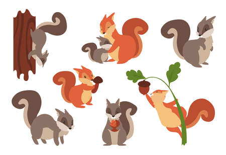 Squirrel. Cartoon wild furry animals playing with nuts and acorns, climbing on tree or holding mushrooms. Gray and orange forest dwellers. Vector adorable rodents set with fluffy tails